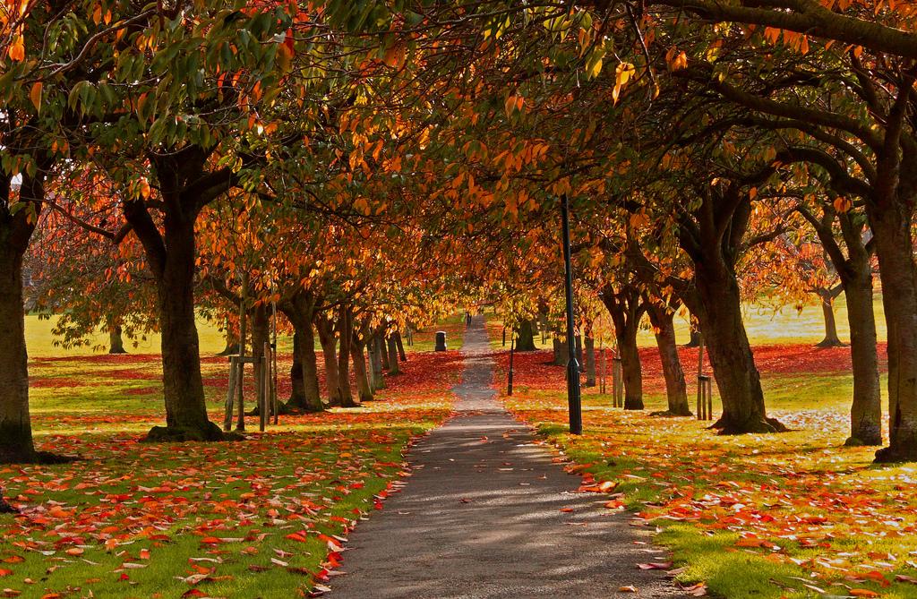 Harrogate In Autumn